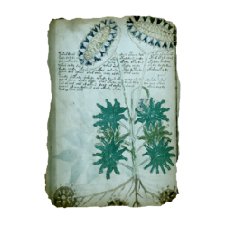AC4BF Voynich Manuscript - Folio 33v.png