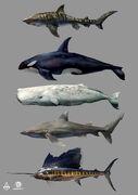 AC4 Marine Animals - Concept Art