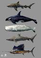 AC4 Marine Animals - Concept Art.jpg