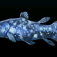 腔棘鱼 - 稀有度:非常稀有,尺寸:大