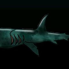 Basking Shark - 稀有度:非常稀有,尺寸:大
