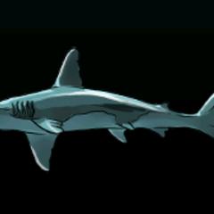 Hammerhead Shark - 稀有度:非常稀有,尺寸:中