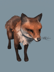 DB Fox