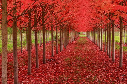 File:Under A Blood Red Sky.jpg