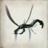 Scissor Bug