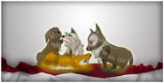 Wieselhund4