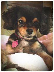 Pixie (10)
