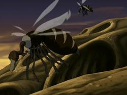 Buzzard wasps