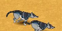 Armadillo wolf