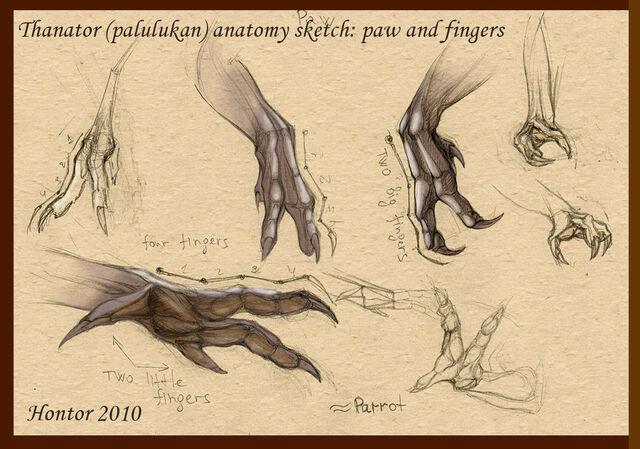 File:Thanator anatomy sketch 3 by hontor.jpg