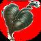 Heart Shaped Herb