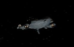 P1-ship01