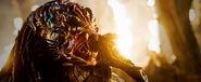 Predators-Berserker