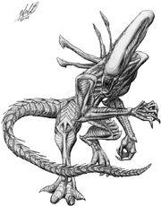 Xenomorph drone sketch by simiankolya-d16ezlk
