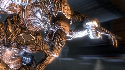 File:Matriarch captured-AVP2010.png