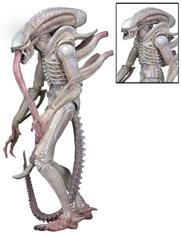 File:Albino-Alien-Aliens-Series-9-by-NECA-002.jpg