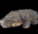 Happabore