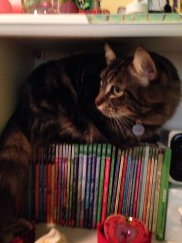 File:Beastior in the bookshelf.jpg