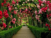 Gardens-around-the-world-butchart-gardens-walkway