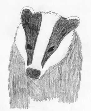 Badger by Spikes