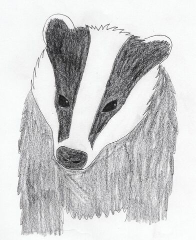 File:Badger by Spikes.jpg