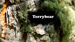 Terrybear