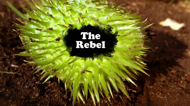 File:The Rebel.PNG
