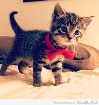 Kittysatbow