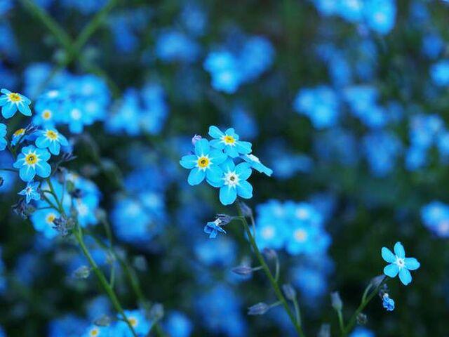 Image Blue Flowers Names Barbie Movies Wiki
