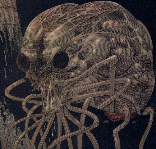 File:Mollusc.jpg