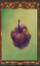 Rotting Mountain Apple (Origins)