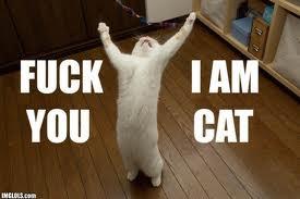 File:Fuck You I Am Cat.jpg