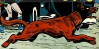 Ace the Bat-Hound