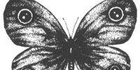 Minois dryas