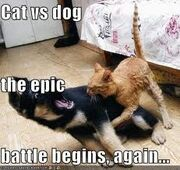 Cat dog