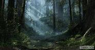 Andrew-hamilton-forest-02-01