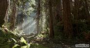 Andrew-hamilton-forest-01-01