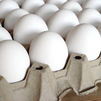 Throwin' Eggs