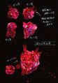 Witch Heart Concept ARt.jpg
