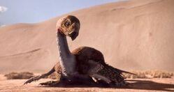 350px-Gigantoraptor