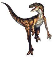 300px-Velociraptor