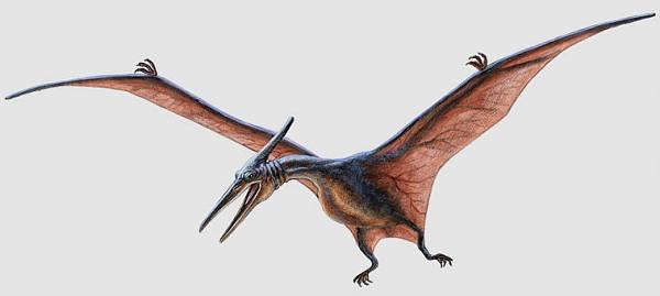 File:Pteranodon (2).jpg