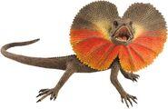 Frilled-neck-lizard4d1