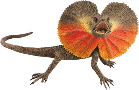 File:Frilled-neck-lizard4d1.jpg