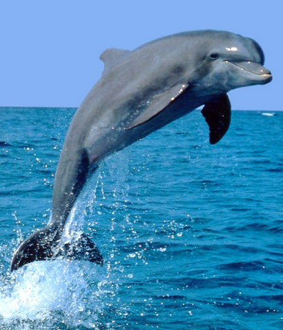 File:Awesome Dolphin.png