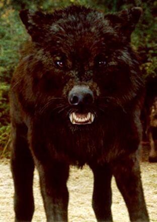 Wolf3x
