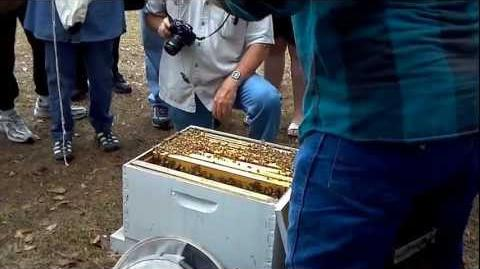Beekeeping Open Hive Demonstration