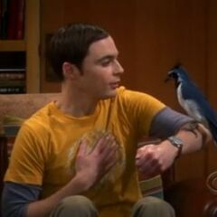 A Black-throated Magpie Jay perches atop Sheldon's forearm.
