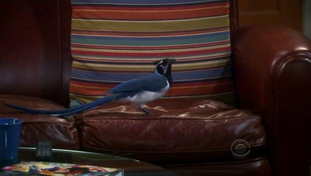 File:Bird on Sheldon's seat.png