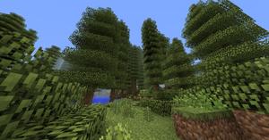 TempRainforest01